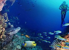 Tioman's magnificent underwater world