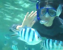 Click here to book your snorkeling outing